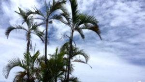 南の島の100のものがたり 石垣島